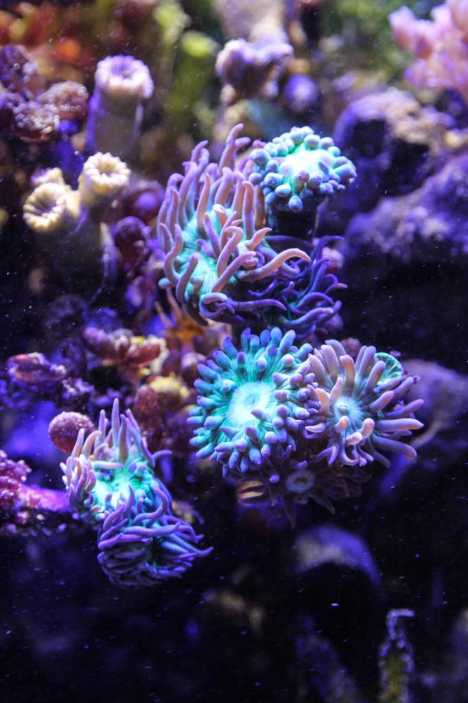Koralle von LED DIY beleuchtet
