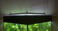 12.000 Lumen für ein Würfelaquarium