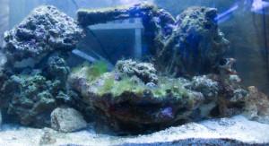 Lebendgestein Aquarium