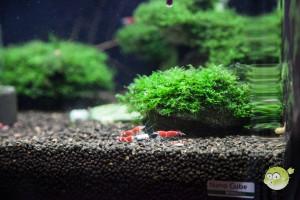 Aquarium Bodengrund