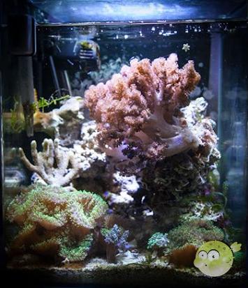 Wasserwechsel Meerwasser Nano Aquarium