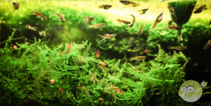 Nano Fische