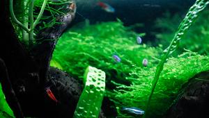 5 Tipps für gesunde Pflanzen im Nanoaquarium