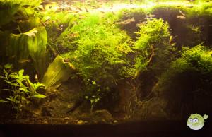 warm weiße Aquarium Beleuchtung
