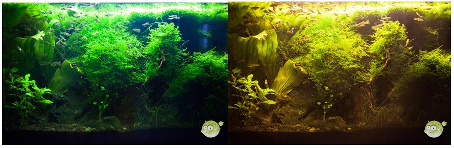 warm weiße und kalt weiße Aquarium Beleuchtung im Vergleich
