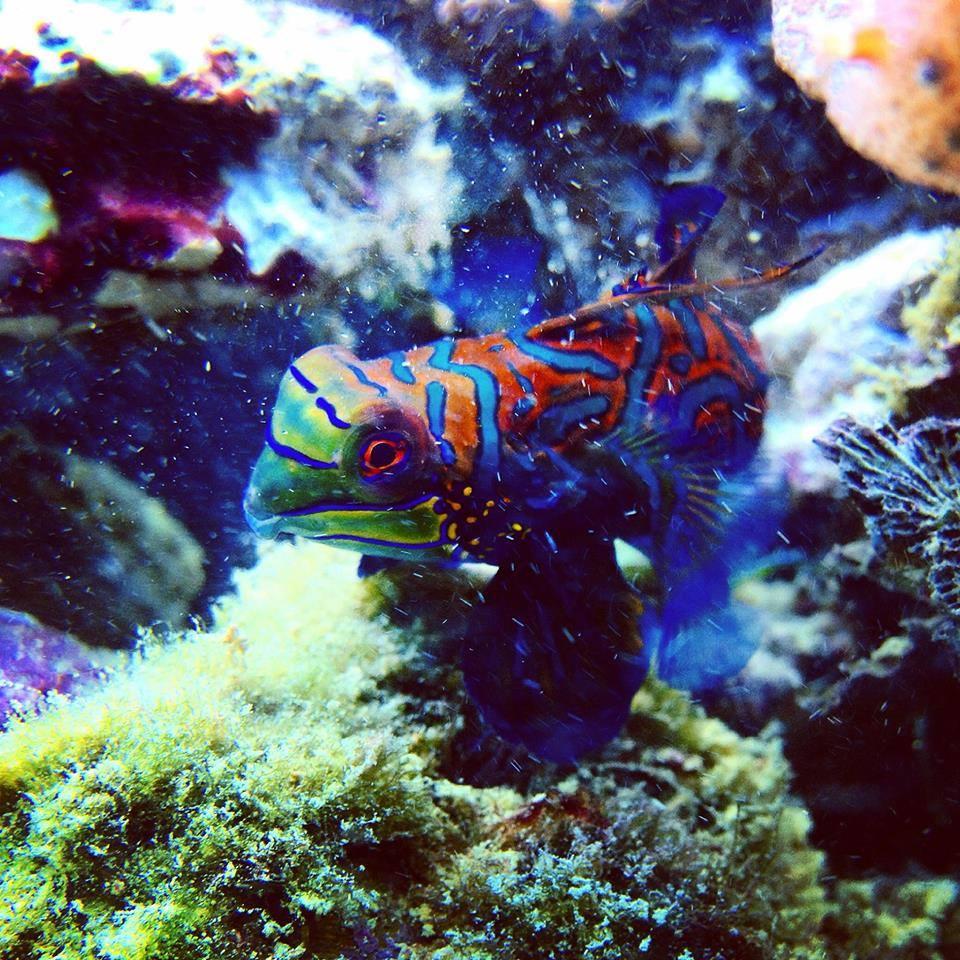 Wie du deine Fische schonend an das neue Aquarium gewöhnst