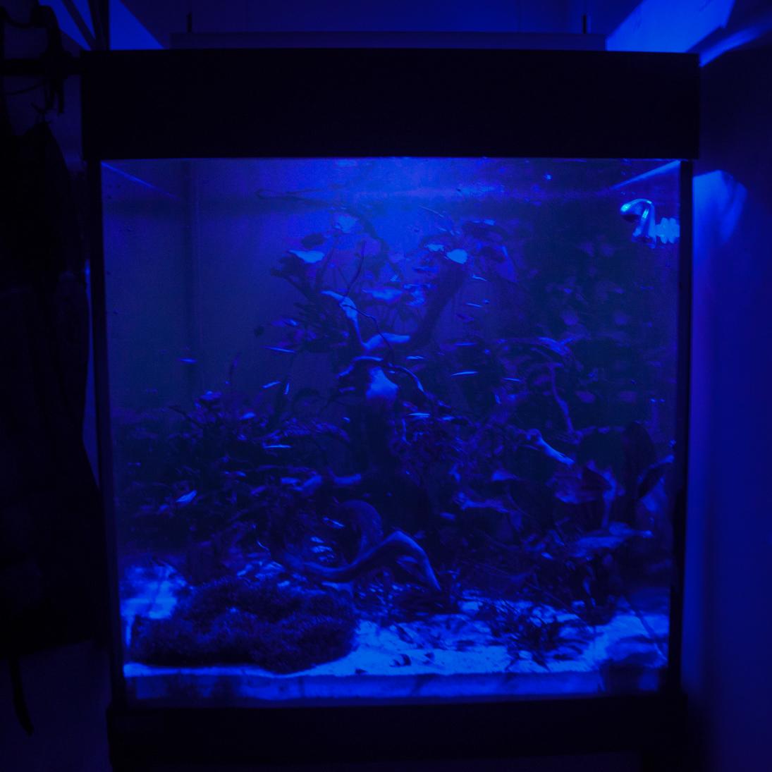 Mondlicht Aquarium 1