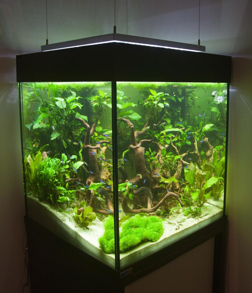 Würfelaquarium Süßwasser 1